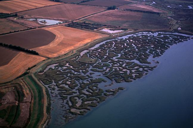 A larger scale future for coastal wilderness? Non-intervention as a buffer against rising sea level – defensive walls were breached to create salt marsh on former cropland. Abbotts Hall Farm, UK (Essex Wildlife Trust)