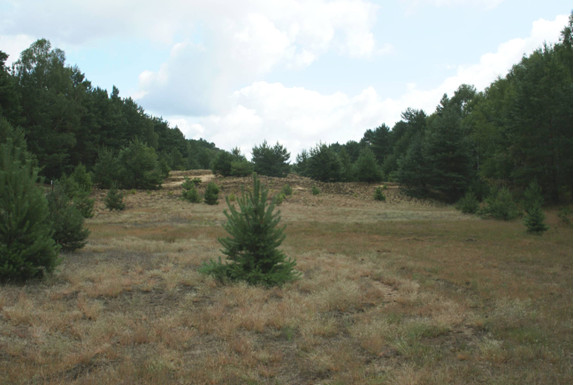 Restoration of former military training areas, Brandenburg