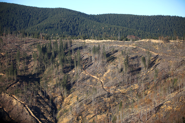 Repairing the damage: large-scale felling erodes hillsides and silts up streams in the Carpathians of Romania (Photo credit: FCC)