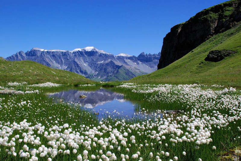Mixed land use in this montane habitat – the mire with cotton sedge may be natural, non-intervention, but what of the grasslands around it? Chamois or cattle....? Glarus Alps, Switzerland