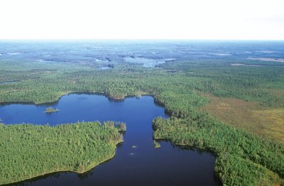 Areal photograph of lakes and forests