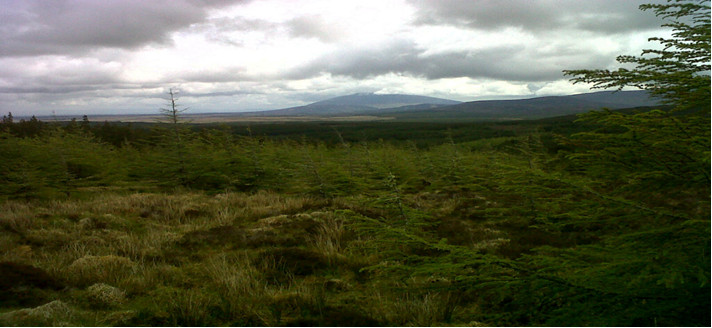 Nephin's panorama of forest, marsh and grassland stretches into the distance