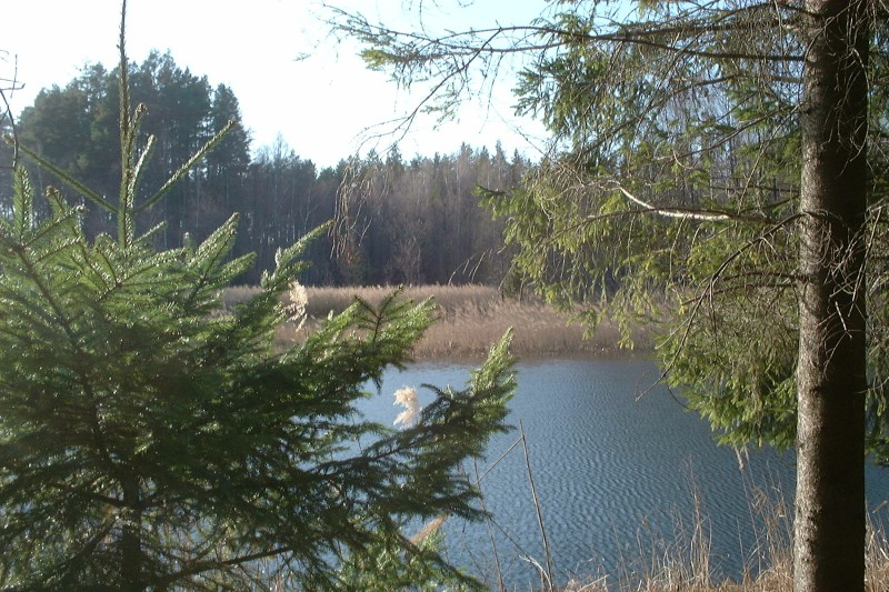 Natural processes at work – will this lake eventually silt up? Perkuć Reserve in Augustów Primeval Forest, Poland