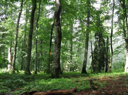 Primeval beech forests of Ukraine