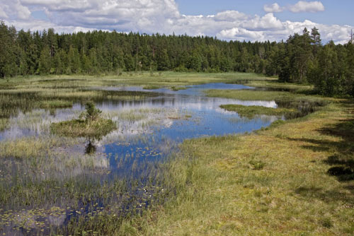 Undisturbed 'wilderness' habitats have higher carbon storage capacity