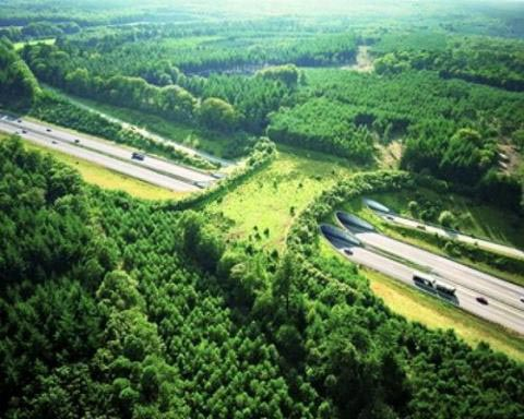 Eco corridor spanning a motorway in the Netherlands