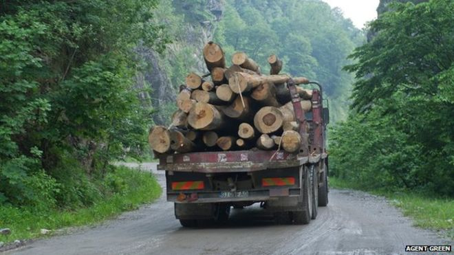 Logging lorry