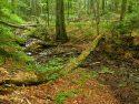 Stuzica primeval forest in Slovakia